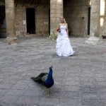 peacock in courtyard with the bride in havana
