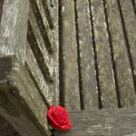rose on a wood bench