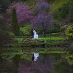 victoria wedding photography-Butchart Gardens (129)