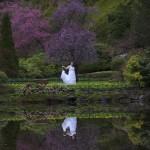 victoria wedding photography-Butchart Gardens (131)