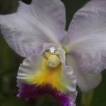 victoria wedding photography-Butchart Gardens (150)