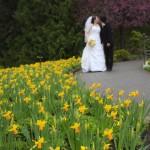 victoria wedding photography-Butchart Gardens (82)