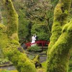 victoria wedding photography-Butchart Gardens (90)