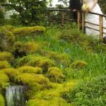 victoria wedding photography-Butchart Gardens (99)